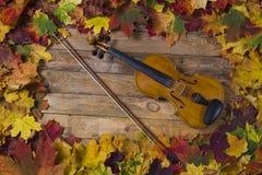 Violino contra o contexto da folha do outono Fotos de Stock Royalty Free