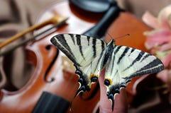 Violino e borboleta borboleta na curva Swallowtail escasso Swallowtail da vela foto de stock