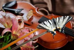 Violino e borboleta borboleta na curva Swallowtail escasso Swallowtail da vela fotos de stock royalty free