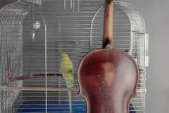 Violino e pappagallo Immagini Stock Libere da Diritti