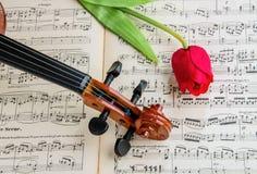 Violino e tulipano Fotografia Stock
