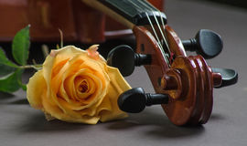 Violino e una rosa Fotografie Stock