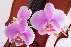 Violino ed orchidee immagine stock