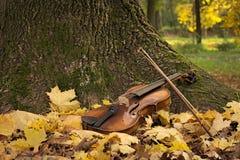 Violino sotto l'albero Immagini Stock Libere da Diritti