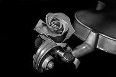 Violino uma rosa Foto de Stock Royalty Free