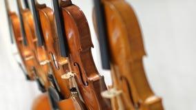 Violinos no fundo branco fotografia de stock royalty free