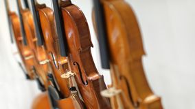 Violins on white background royalty free stock photography