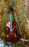 Violon Images stock