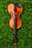 Violon dans l'herbe Photos stock