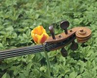 Violoncelo e tulipa Fotos de Stock Royalty Free