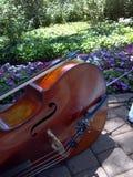 Violoncelo no jardim Imagens de Stock