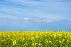 Viols de jaune image libre de droits