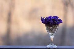 viooltje Stock Afbeeldingen