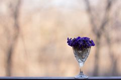 viooltje Royalty-vrije Stock Fotografie
