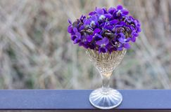viooltje Royalty-vrije Stock Foto's