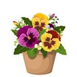 Viooltjebloemen in een pot. Stock Afbeeldingen
