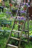 Viooltjebloemen op een oude houten ladder in de tuin worden verfraaid die royalty-vrije stock afbeelding