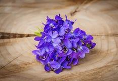 viooltjes Royalty-vrije Stock Foto