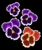 viooltjes Stock Afbeeldingen