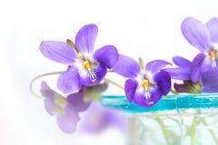 Viooltjes in blauwe glasvaas Royalty-vrije Stock Afbeelding