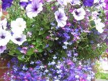 Viooltjes en purples stock afbeelding