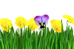 Viooltjes in het gras Royalty-vrije Stock Afbeeldingen