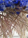 Viooltjes in het water Royalty-vrije Stock Foto