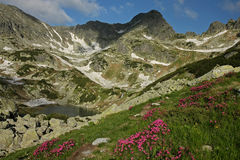 Viorica lake in summer with rhododendron. Retezat National Park, Romania Royalty Free Stock Photography