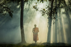 Vipassana meditation monk walks in a quiet forest. Royalty Free Stock Photography