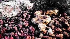 viper stockfotografie