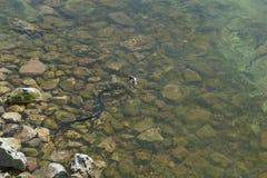 Viper and fish Stock Photo