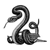 Viper snake. serpent cobra and python, anaconda or viper, royal. engraved hand drawn in old sketch, vintage style for Stock Photo