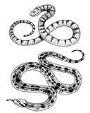 Viper snake. serpent cobra and python, anaconda or viper, royal. engraved hand drawn in old sketch, vintage style for Royalty Free Stock Photography