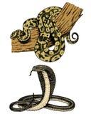 Vipernschlange Schlangenkobra und -pythonschlange, Anakonda oder Viper, königlich gravierte Hand gezeichnet in alte Skizze, Weinl stock abbildung