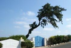 Vippat på härligt sörjer trädet på himmelbakgrunden Royaltyfri Fotografi
