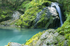 Vir Zeleni πράσινη δίνη Στοκ Φωτογραφίες