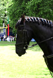 Vira caballos hacia el lado de babor en la munición antes de competencias fotos de archivo libres de regalías