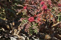 Virakträd i blomning Fotografering för Bildbyråer