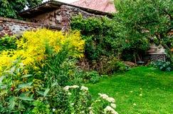 Virgaurea de Solidago d'or grand et pommier sur une arrière-cour de ferme Photographie stock