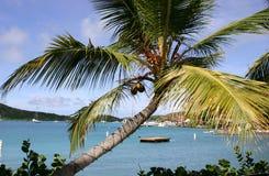 virgin пальмы gorda Стоковое Фото