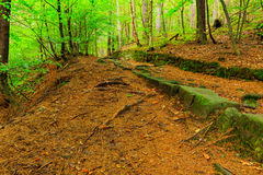 The virgin forest of the fresh green Royalty Free Stock Photo