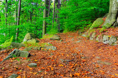 The virgin forest of the fresh green Royalty Free Stock Photos
