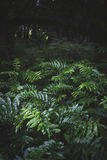 Virgin forest. Lost in the virgin forest Royalty Free Stock Photography