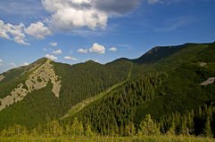 Virgin Forest in the mountains. Nature. Summer. Mountain forest in the Ukrainian Carpathians royalty free stock photography
