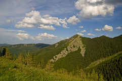 Virgin Forest in the mountains. Nature. Summer. Mountain forest in the Ukrainian Carpathians stock photography