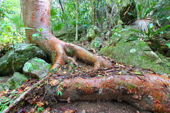 Virgin Islands National Park Forest Stock Photography