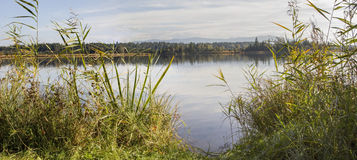 Virgin landscape with reed grass and moor lake, mountain view Royalty Free Stock Photo