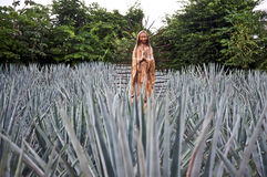 Virgin Mary in agave field Royalty Free Stock Photo