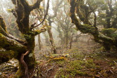 Virgin mountain rainforest of Marlborough, NZ Royalty Free Stock Photo