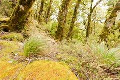 Virgin mountain rainforest of Marlborough, NZ Royalty Free Stock Photo
